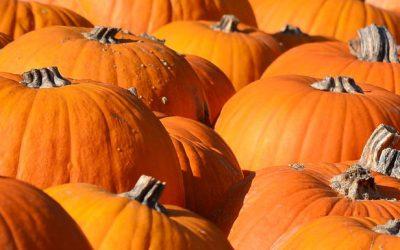 Waimea Pumpkin Patch Festival this Weekend!